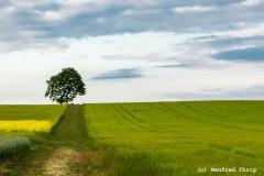 Baum am Weg 2